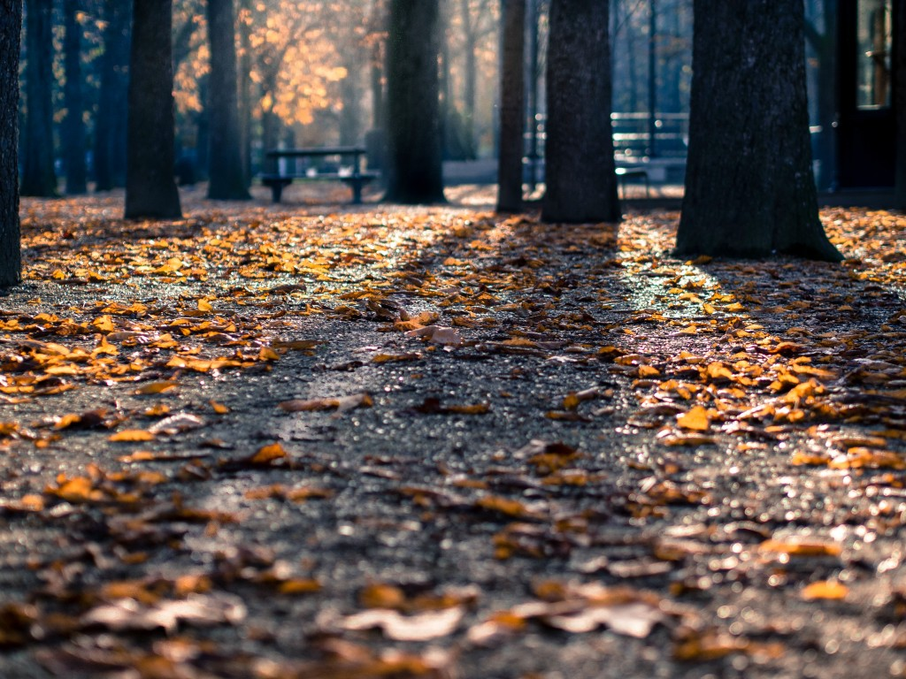 25 Falling-in-Love Fall Dates