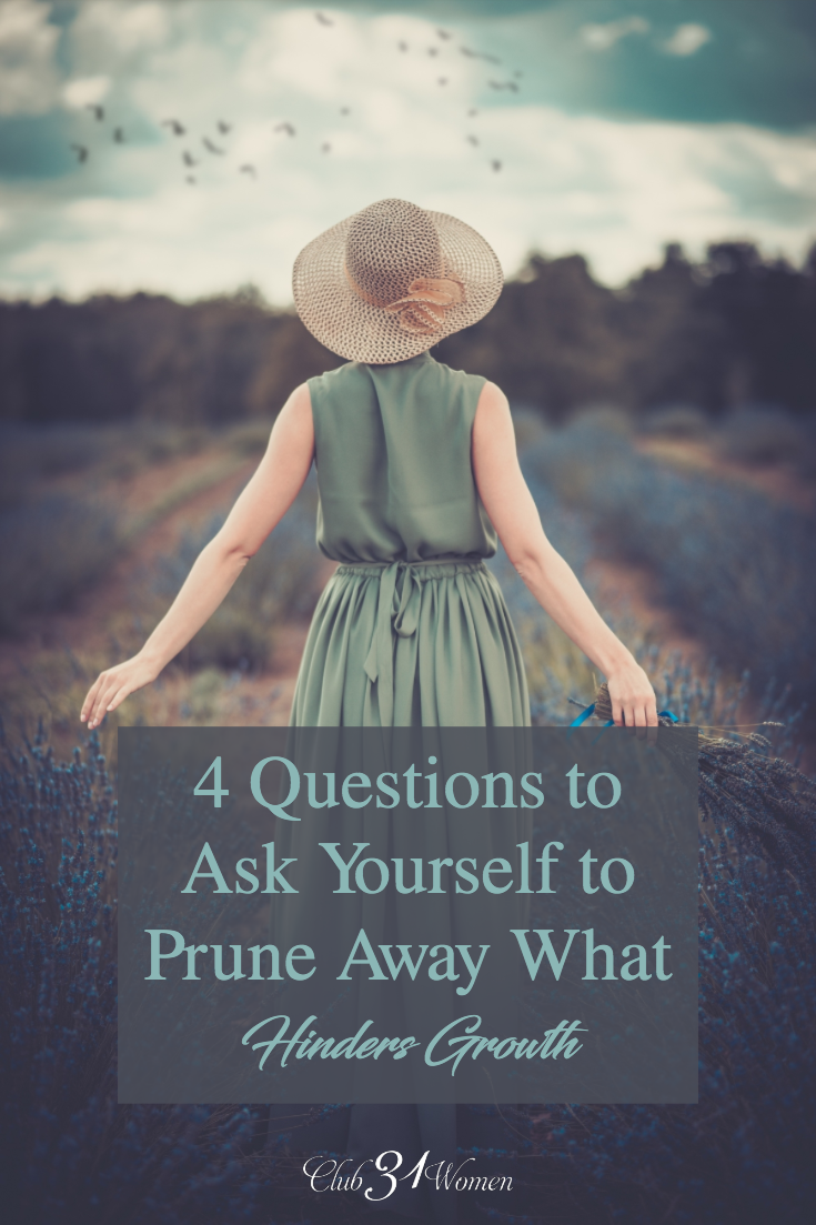 When you feel stuck here are some questions to ask yourself so God will prune away the not-so-great stuff, and we will begin to see fruit stem up from it.  via @Club31Women
