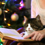 Christmas Christian Fiction That Will Warm Your Heart
